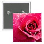 Descensos de rocío en el Pin color de rosa