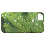 Descensos de rocío en una hoja iPhone 5 Case-Mate protector