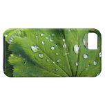 Descensos de rocío en una hoja iPhone 5 Case-Mate protectores