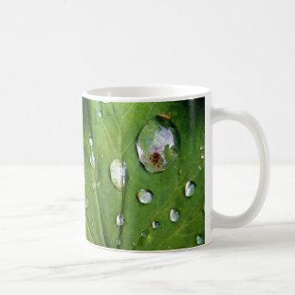 Descensos de rocío en una hoja taza de café
