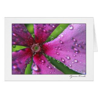 Descensos de rocío una flor rosada tarjeta de felicitación