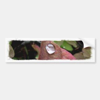 Descensos del agua en follaje etiqueta de parachoque