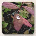 Descensos del agua en follaje posavasos