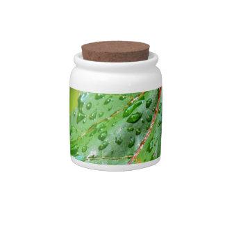 Descensos del agua en una hoja verde jarra para caramelo