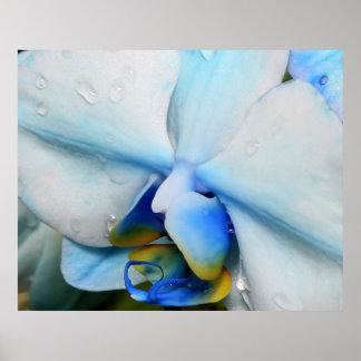 Descensos en orquídea azul poster
