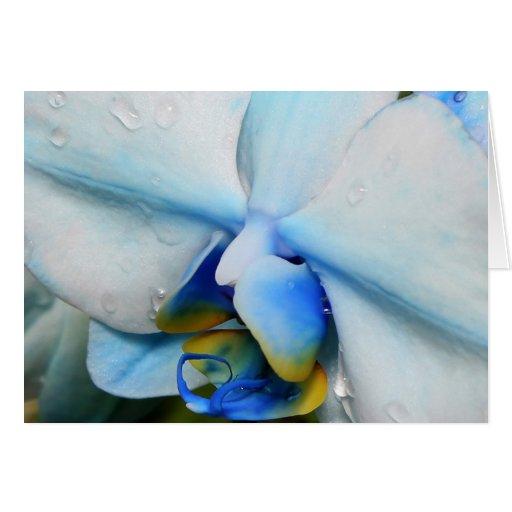 Descensos en orquídea azul tarjeta pequeña