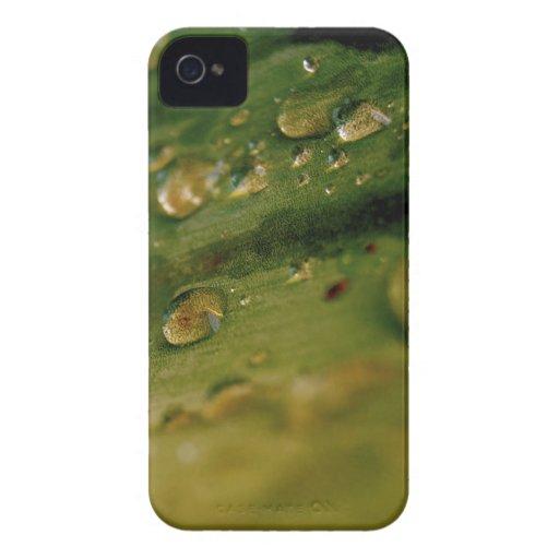 Descensos iPhone 4 Case-Mate Funda