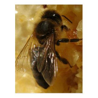 Description Description A worker black bee ( Apis  Postcard