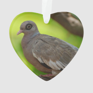 Descubra la paloma observada
