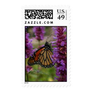 Descuento a granel de los sellos de la mariposa de
