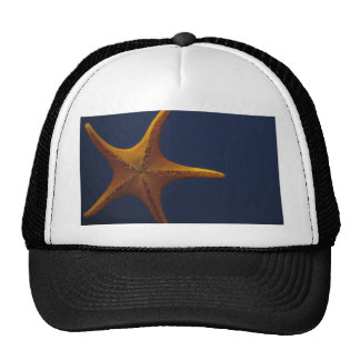 Deseo sobre una estrella de mar gorra