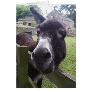 Deseos del cumpleaños del burro tarjeta de felicitación