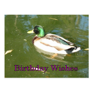 Deseos del cumpleaños del pato del pato silvestre tarjeta postal