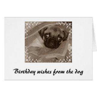 Deseos del cumpleaños del perro tarjetas
