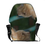 Deseos del gatito bolsas messenger