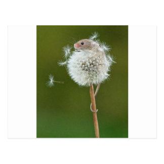 Deseos del ratón postal
