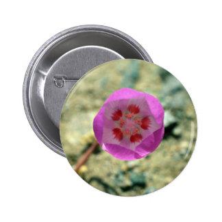 Desert 5-spot flowers pins
