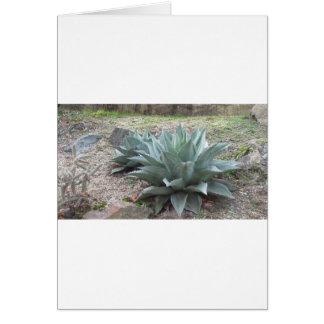 Desert Agave Plants Card