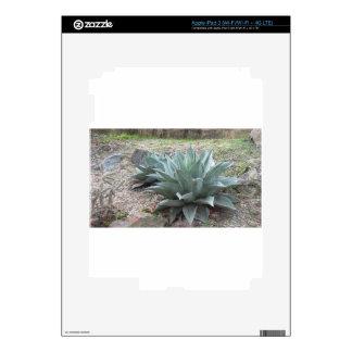 Desert Agave Plants iPad 3 Skin