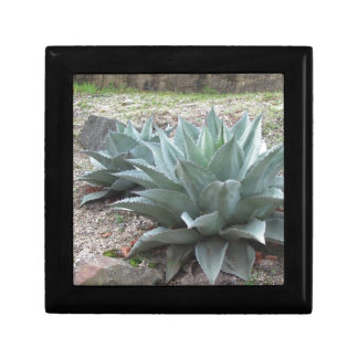Desert Agave Plants Jewelry Box