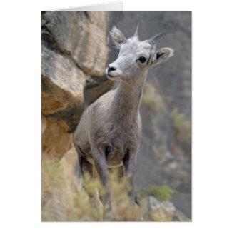 Desert Bighorn Ewe Greeting Cards