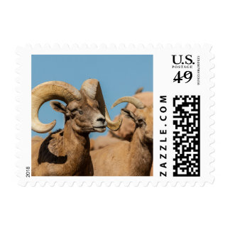 Desert Bighorn Male and Female Postage