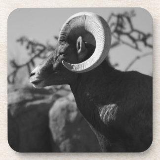 Desert Bighorn Sheep Coaster