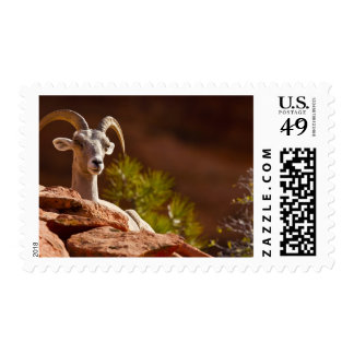 Desert Bighorn sheep (Ovis canadensis nelsoni). Postage Stamp