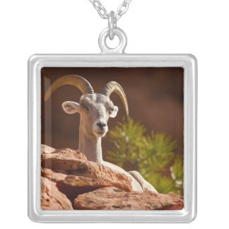 Desert Bighorn sheep (Ovis canadensis nelsoni). Silver Plated Necklace