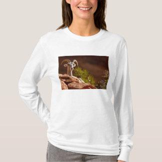 Desert Bighorn sheep (Ovis canadensis nelsoni). T-Shirt