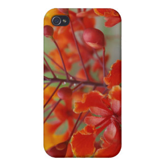Desert Bird of Paradise Covers For iPhone 4