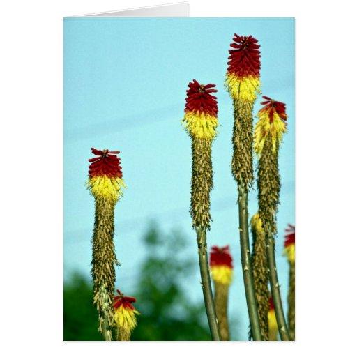Desert bloom, outside Phoenix, Arizona, U.S.A. Cards