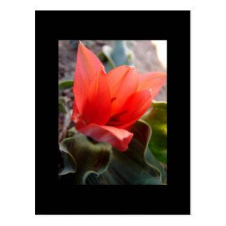 desert bloom postcard