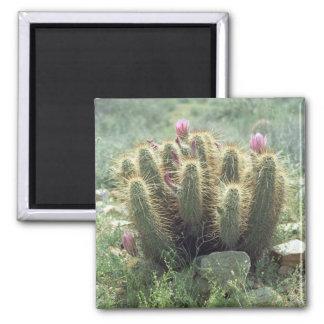 Desert Blooms Cactus Refrigerator Gift Magnet