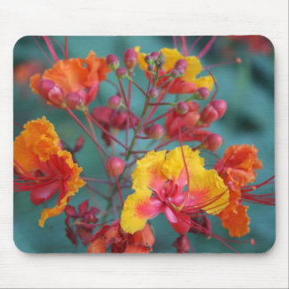 desert blooms mouse pad