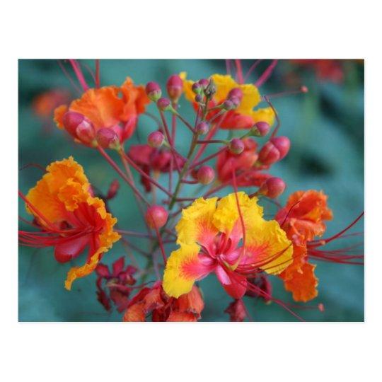 desert blooms postcard