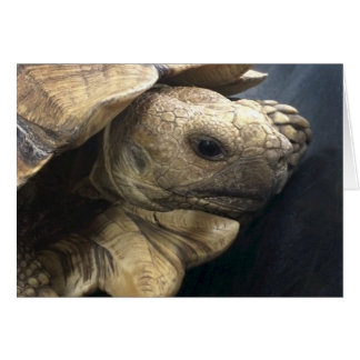 Desert Box Turtle Card