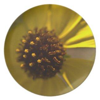 Desert Brittlebrush Blossom Party Plate