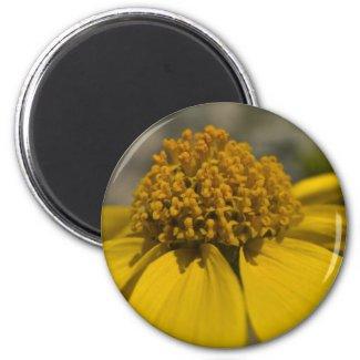 Desert Brittlebrush Round Magnet zazzle_magnet