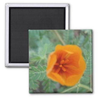desert broom flower fridge magnets