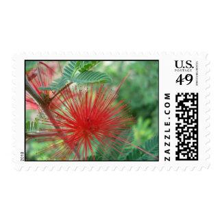 Desert Broom Flower Stamp