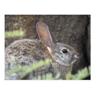Desert Bunny Postcard