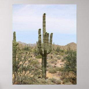 Desert Cactus Art Wall Décor Zazzle