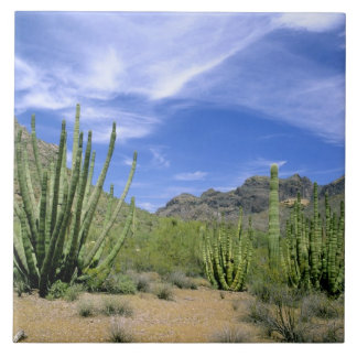 Desert cactus at Organ Pipe National Monument, Ceramic Tile