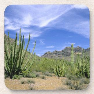 Desert cactus at Organ Pipe National Monument, Drink Coaster