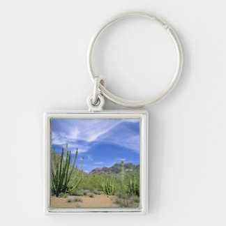Desert cactus at Organ Pipe National Monument, Keychain