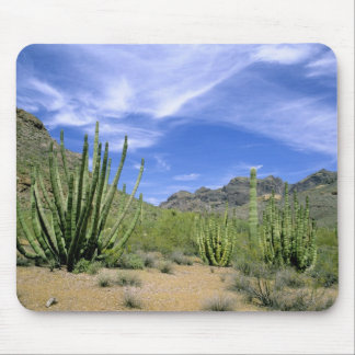 Desert cactus at Organ Pipe National Monument, Mouse Pad