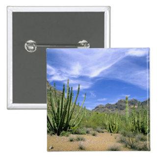 Desert cactus at Organ Pipe National Monument, Pinback Button