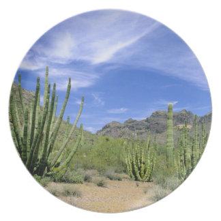 Desert cactus at Organ Pipe National Monument, Plates