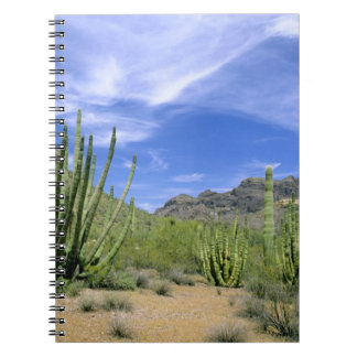 Desert cactus at Organ Pipe National Monument, Spiral Notebook